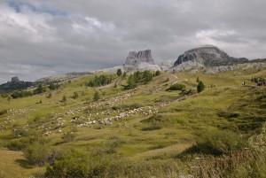 Italian Alps  Sheep Meadow