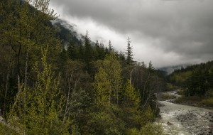 Tongas National Forrest